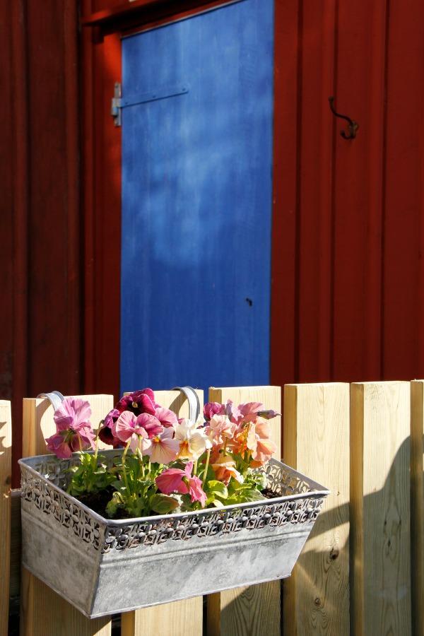 Blommor mot sjöbodsvägg - Foto: Carita Filipsson
