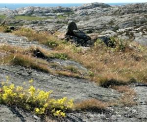 I klipporna - Foto: Lars Nordström