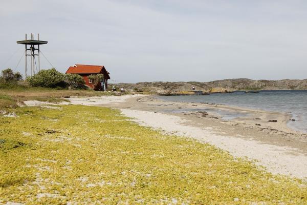 Grindebacken - Foto: Carita Filipsson