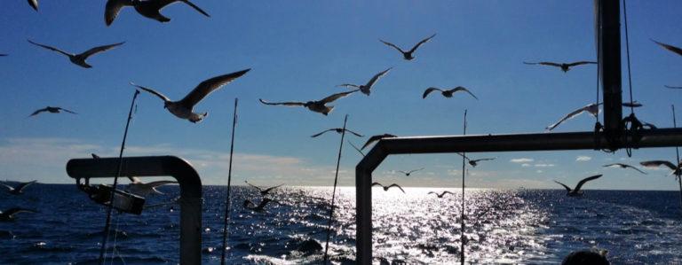 Fåglar (1)